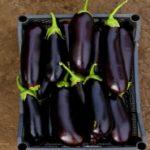 Баклажаны — районированные сорта