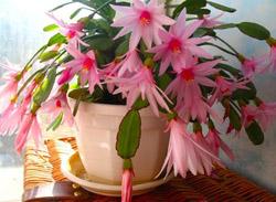 Зимой цветущие комнатные цветы