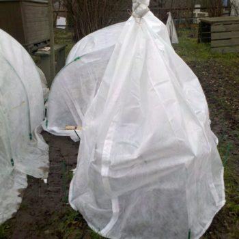 Защита растений от весенних заморозков